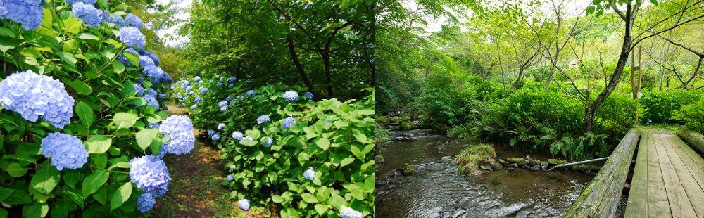 nature2